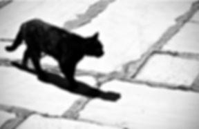 RC chat noir route.jpg