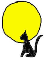 CHHC chat dans soleil.jpg