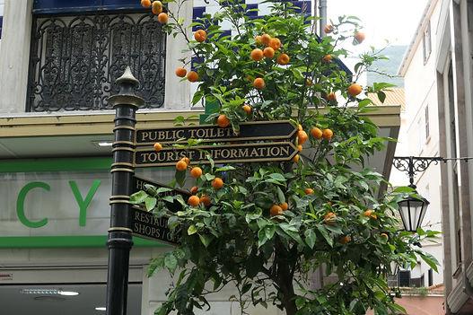 V Gib oranges.jpg