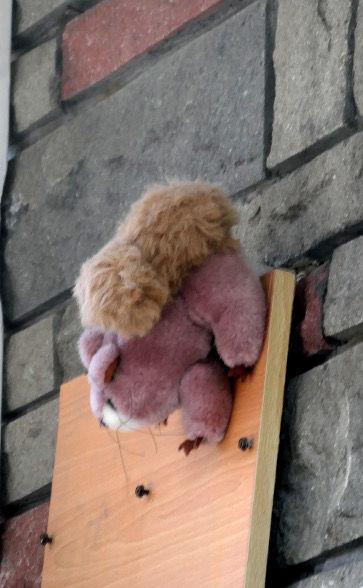 écureuil peluche.jpg
