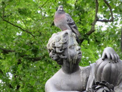 L Pigeon.JPG