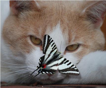 RC papillons.jpg
