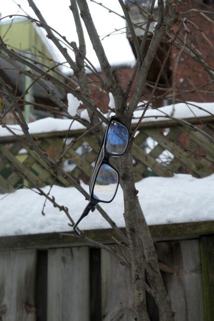 arbre lunettes.jpg