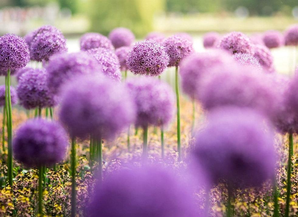 flores-scaled_edited.jpg