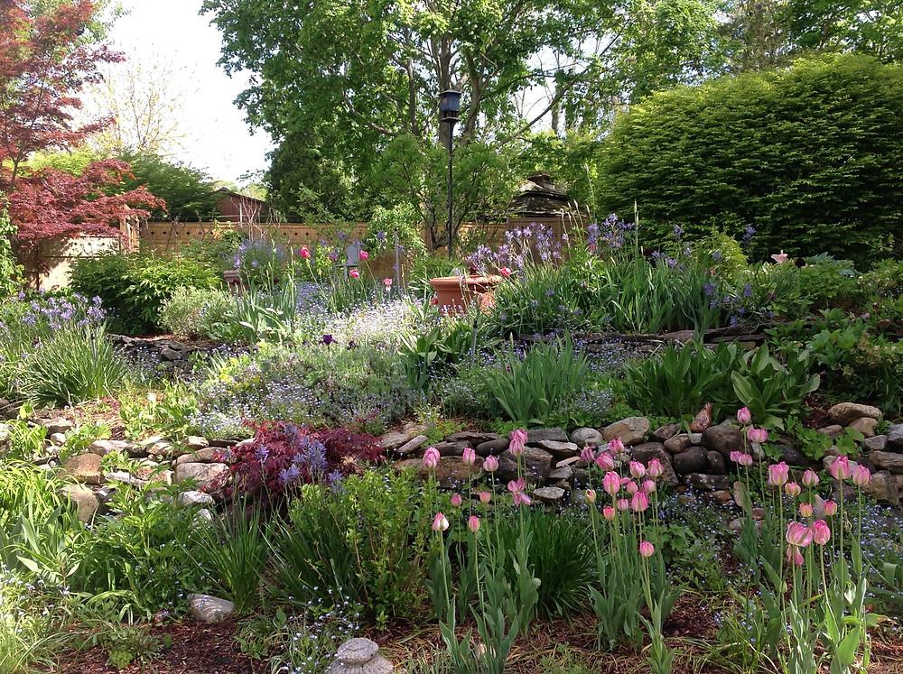A local garden we tend