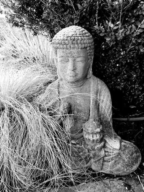 Buddha Head Statue with Stipa Grass