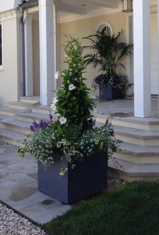 Planter with White Mandevilla