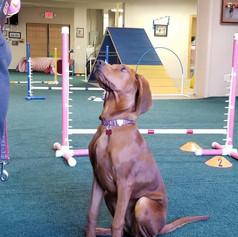 Dog-School-of-Louisville-Interior-Photo-