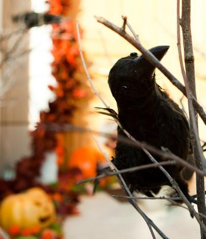 halloween_birthday_party (1).jpg