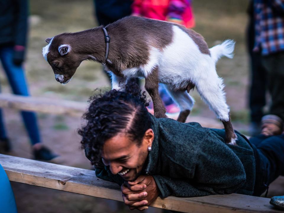 Stephan goat 2.jpg