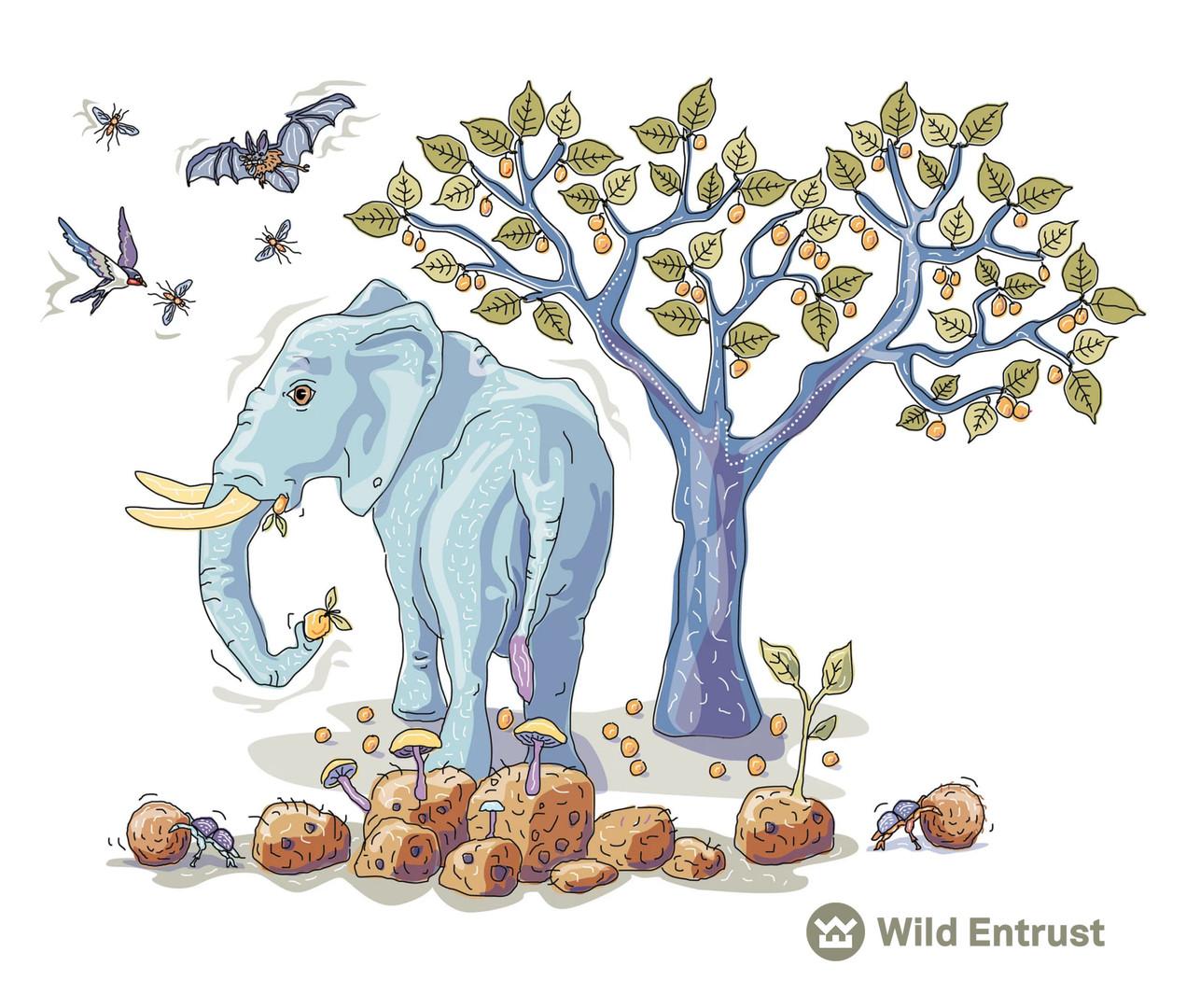 CHARLES BONGERS AFRICAN ELEPHANT WILD ENTRUST