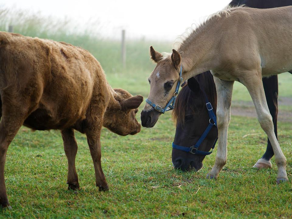 Calf and Foal.jpg