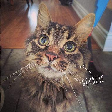 CAT georgie.jpg