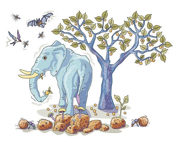 ELEPHANT WIX 2.jpg