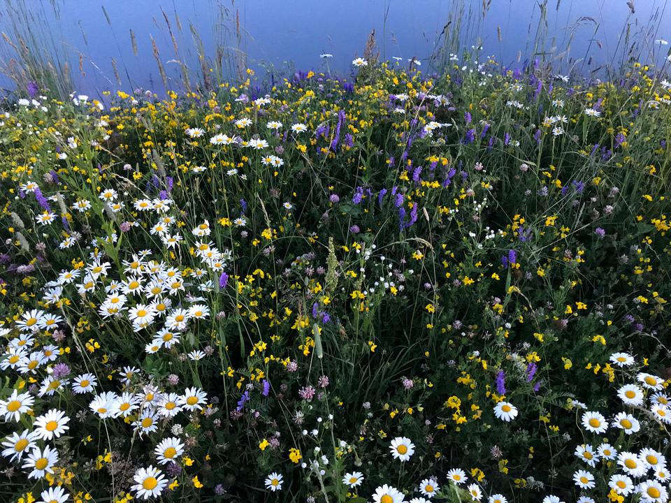 Woodfield flowers.jpg