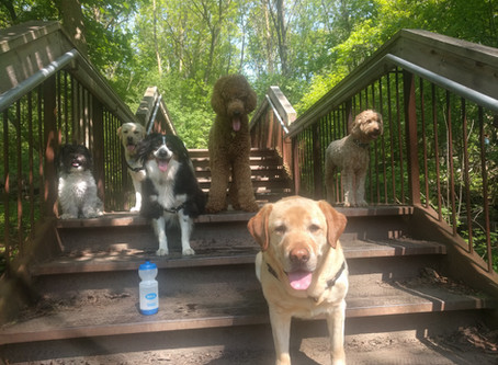 3 Unwritten rules Dog Walkers wish everyone knew