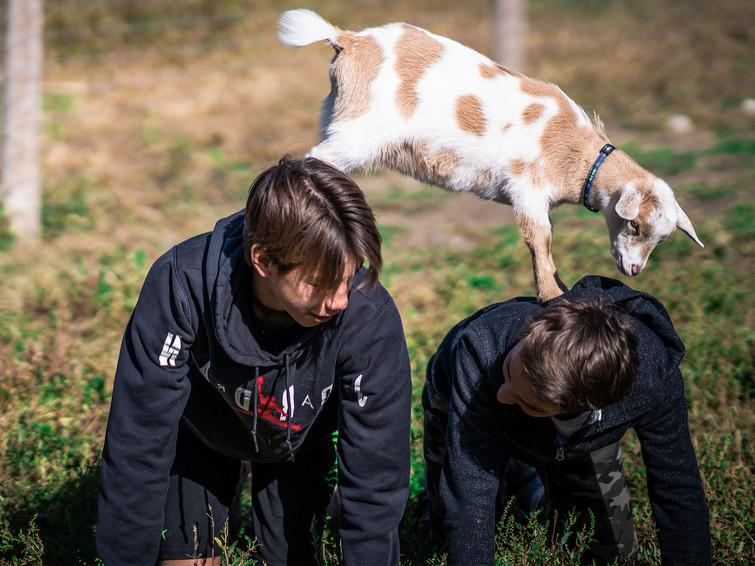 goat on kids_edited.jpg