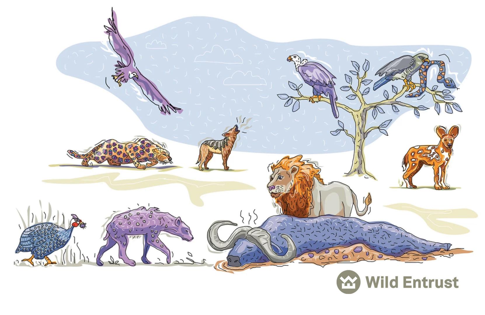 CHARLES BONGERS AFRICAN LION WILD ENTRUST