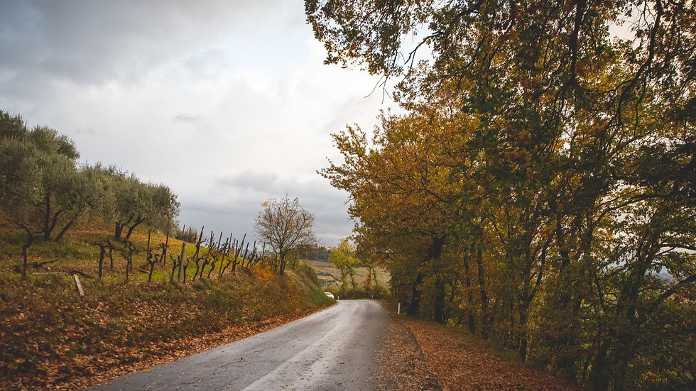 Disoverin Tuscany, culinaru tours.  An Italian Road in autumn