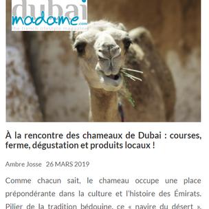 Chameaux DM.png