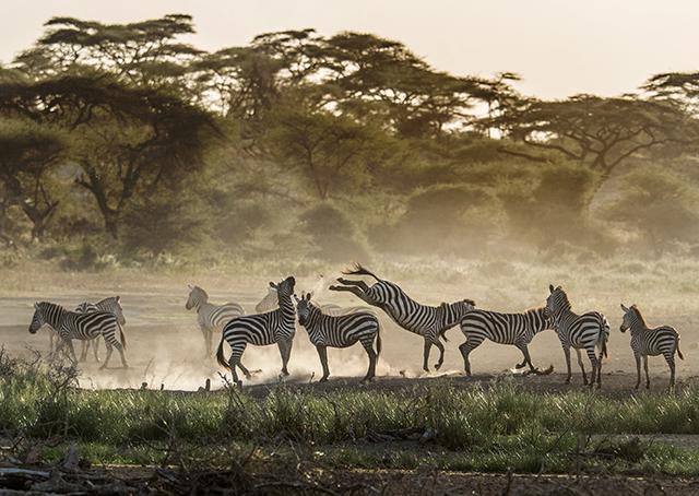20150313_Serengeti_1665F