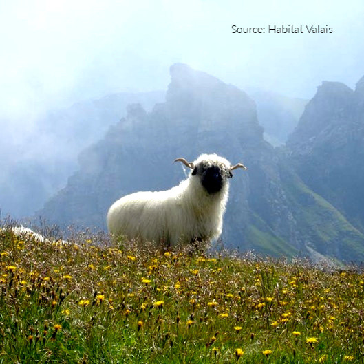 Valais on Mountain Top