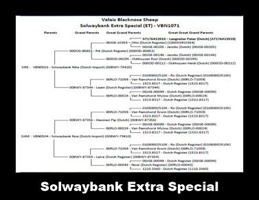 Solwaybankgenetics2.png