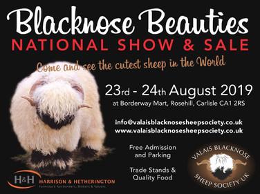 Blacknose Beauties