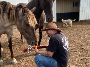 Horses and healing