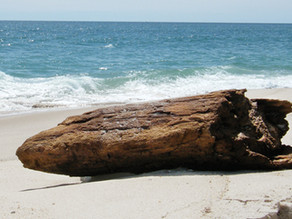 Just a Kid at Heart: Driftwood deception