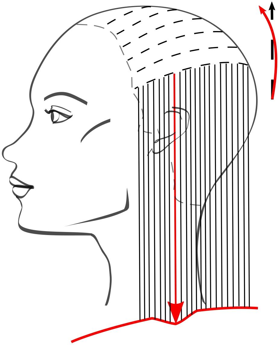 Продолжаем стричь, ориентируясь на дугообразную линию среза в затылочной зоне, таким образом получаем небольшое удлинение в этом месте под ушной раковиной. Следующие пряди стрижём, сохраняя линию среза первой пряди.