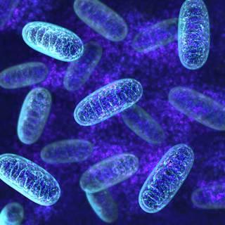 mitochondriats521497656_1163270