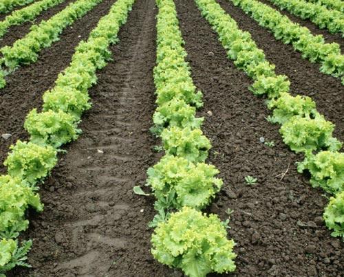 有氧的土壤才能生長出有氧的食物