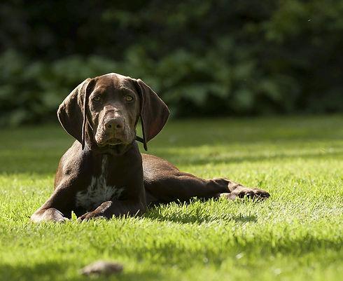 puppy-1624446_1280.jpg