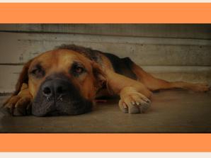 Traurigkeit und Depressionen beim Hund