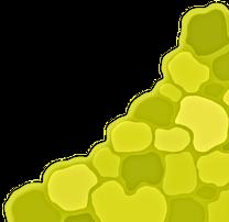 Light green scale pattern