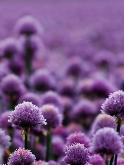 purple_edited.jpg