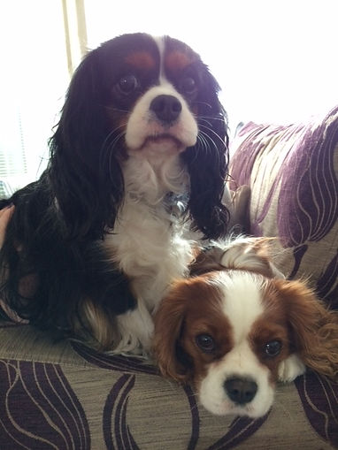 Lilly & Bailey on settee.JPG
