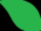 green transparent leaf