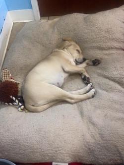 brandy puppy.jpg