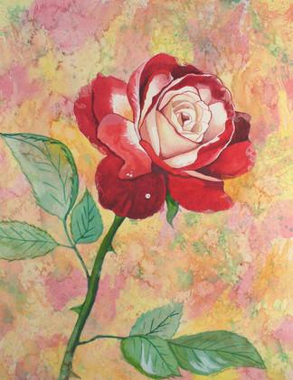 One Rain Rose_1