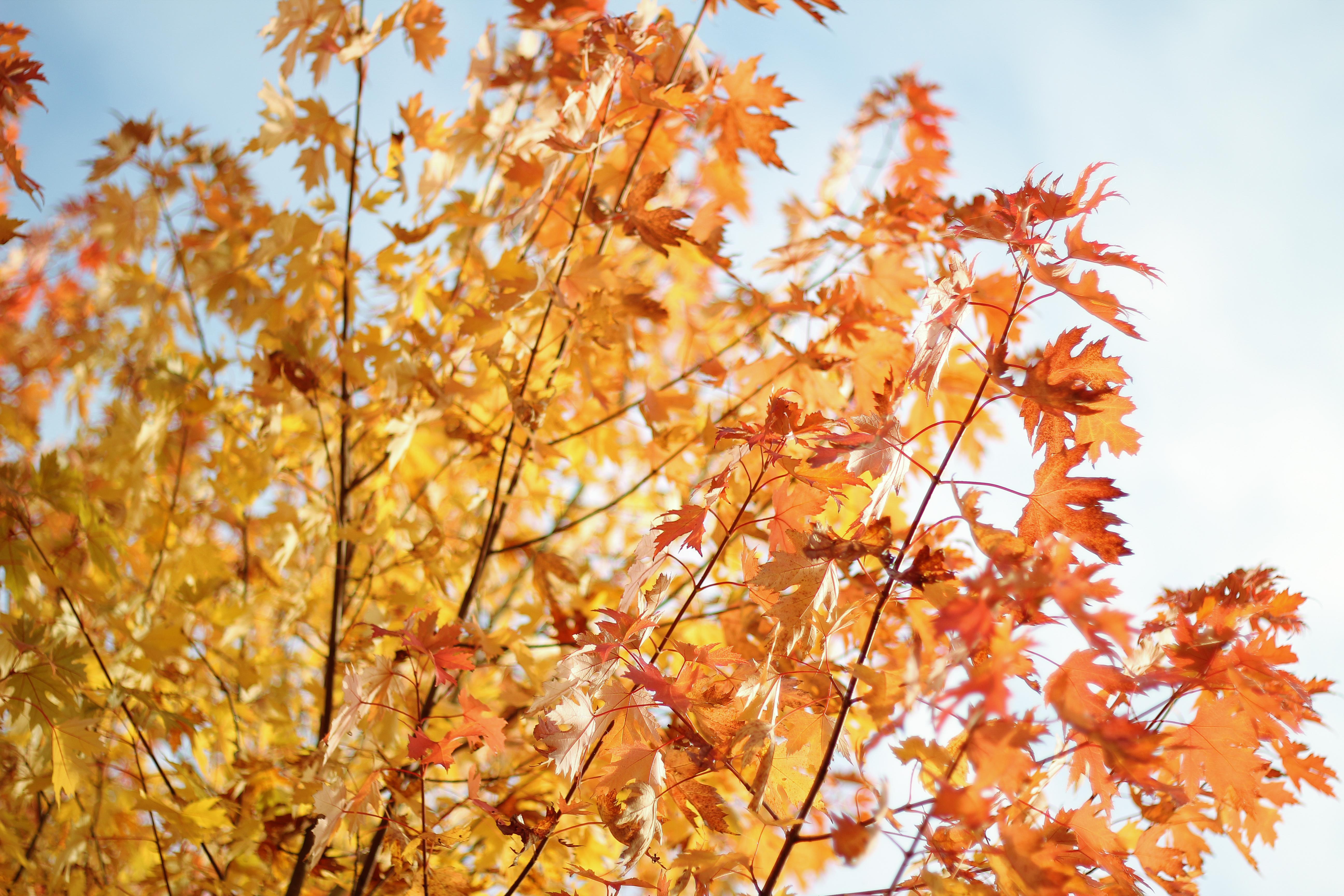 Petit gouter d'automne