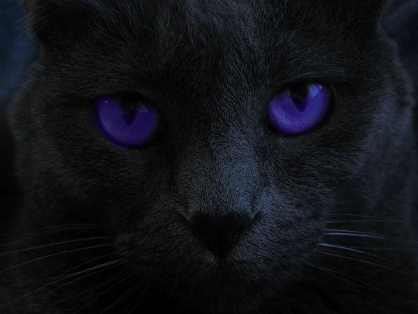 Black Cat Purple Eyes.jpg