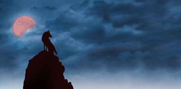 Wolf Top.jpg