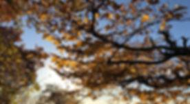 Herbstbäume_bearbeitet.jpg