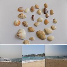 琴ヶ浜.jpg