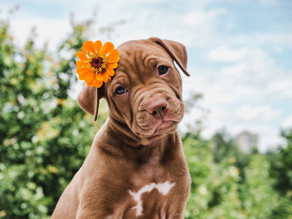 Cute, charming puppy, sitting on a soft