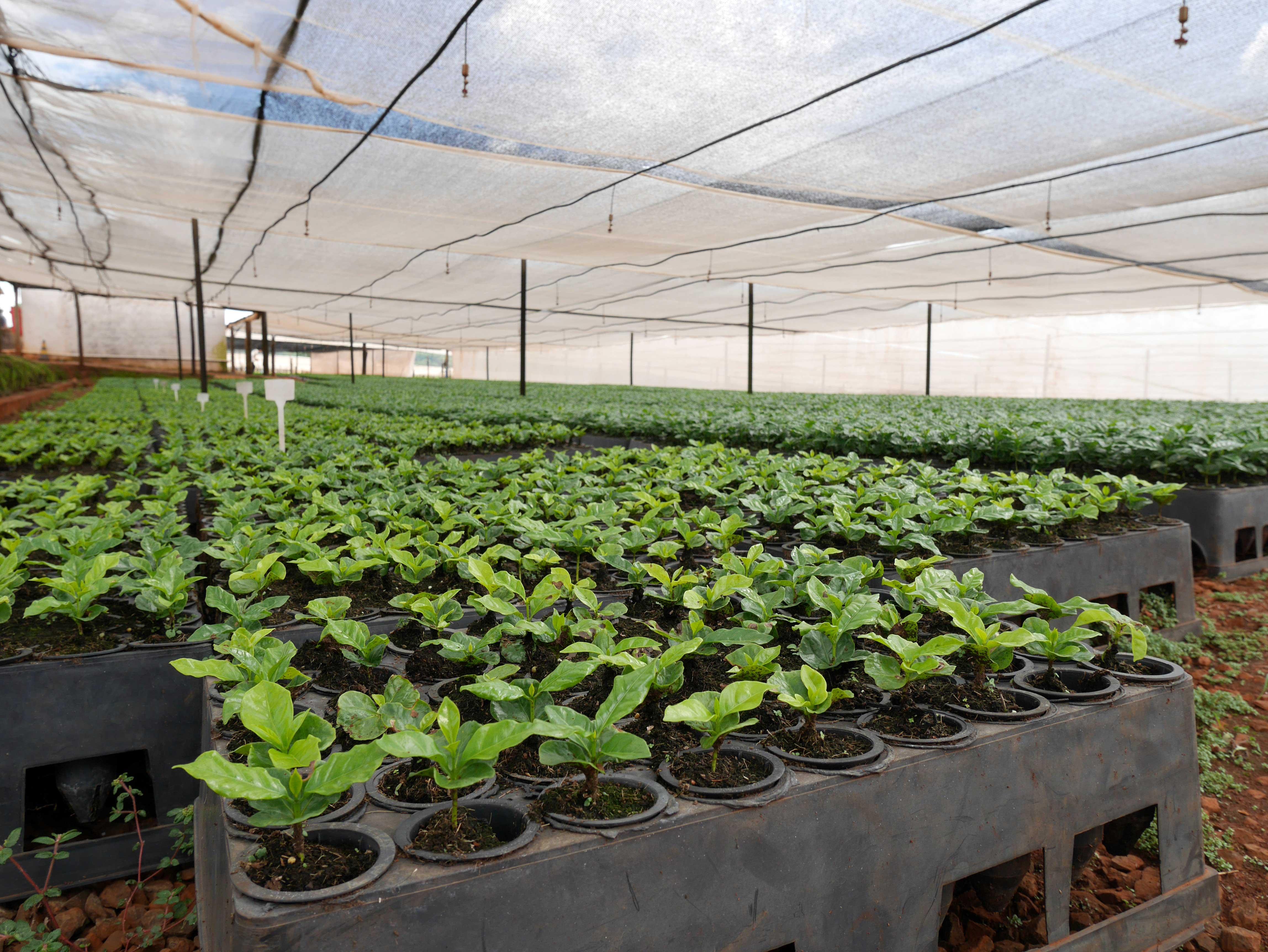 Fazenda-Bela-Epoca-nursery-2