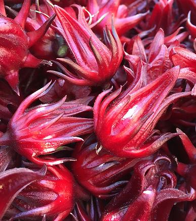 Hibiscus (Hibiscus sabdariffa).jpg