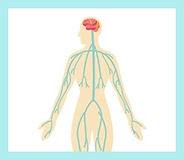 自律神経をと整える